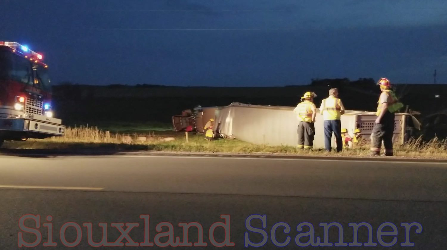 Unlicensed distracted Last Ride Semi driver crashes into bridge and lands in ditch killing 60 hogs